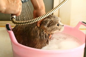 cat-gets-bath